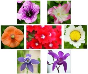 1-20190507-floweringarden-dsc09961brwb_t