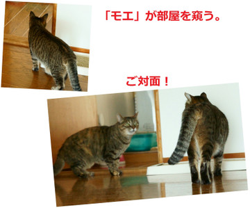20160815_greeting_dsc03910and11_brw