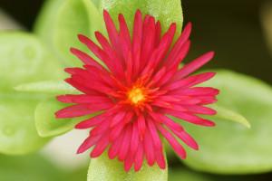 5_20160916_floweringarden_dsc04675w