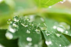 5_20181206_leafofwaterdrop_dsc08411