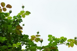 3-20190507-floweringarden-dsc09972brwb_t